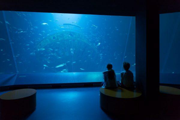 Beobachtungen der Unterwasserwelt im Ozeaneum